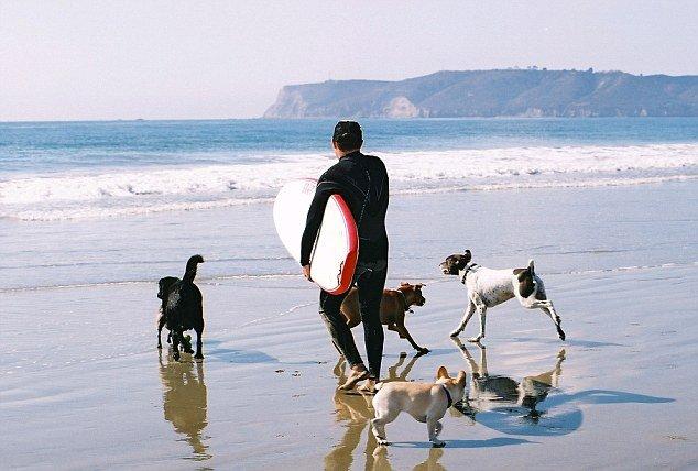 Dog-surfing-instructor